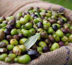 Čo je to coupage z olivového oleja?